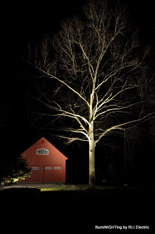 Beech tree and barn lighting