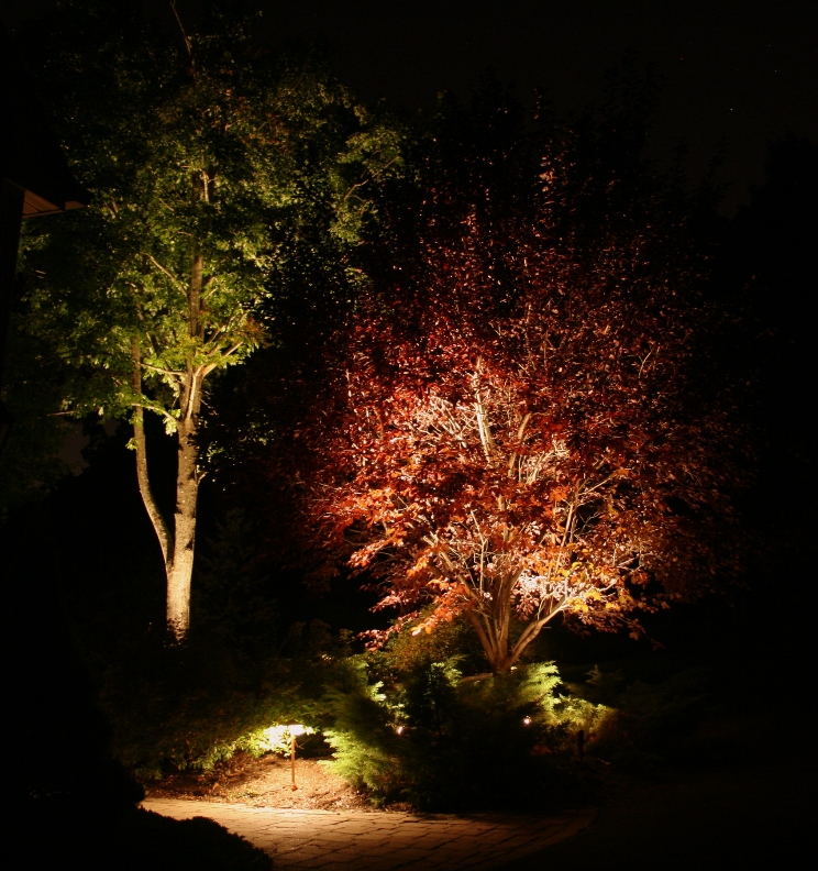Front yard Red Plum at Night