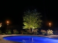 River Birch with two Patio Area Lights