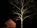 Beech tree and barn lighting