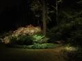 enchanted-path